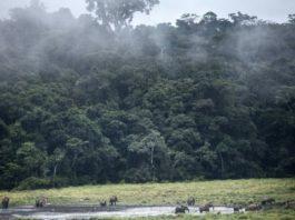 Evergreen Gabon Foreset, home to precious woods