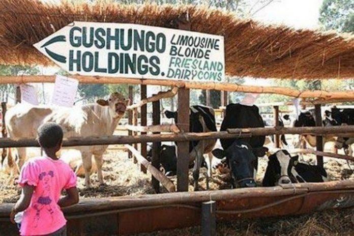 Mugabe's Gushungo farm