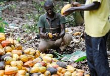 Ghana, Ivory Coast suspend threat to halt cocoa supplies