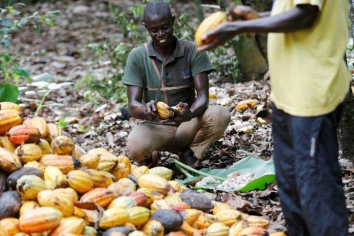 Ghana, Ivory Coast suspend threat to halt cocoa supplies